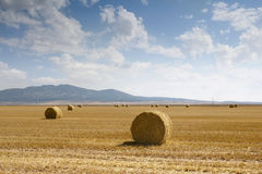 Hayfield. Recollection of hay on august Royalty Free Stock Image