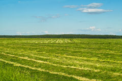 Hayfield Stock Photo