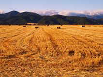Hayfield. View of hayfield with haypacks and mountains Stock Images