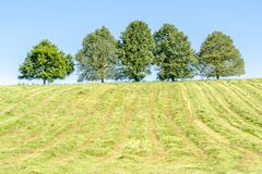 Hayfield avec les arbres fruitiers photo stock