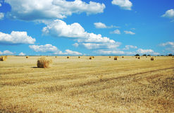 Hayfield Stock Image