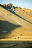 Hayfield, casa abbandonata, montagna, viaggio stradale, Islanda Fotografia Stock
