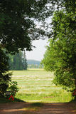Hayfield through clearing in the woods Royalty Free Stock Images