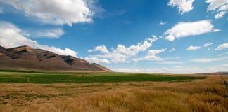 Hayfield dell'alfalfa e giacimento di grano nell'ambito dei cumuli nel Wyoming Fotografia Stock