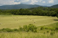 Hayfield, Early Summer. Landscape, East Tennessee stock images