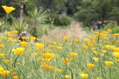 Hayfield. Flower meadow with orange flowers Stock Photo