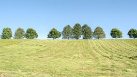 Hayfield with fruit trees. Sunny scenery showing a hayfield with fruit trees at spring time in Hohenlohe, a area in Southern Germany Royalty Free Stock Photo