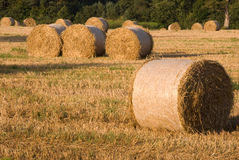 Hayfield at harvest II Stock Image