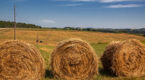 Hayfield. Hay harvesting Sunny autumn landscape. rolls of fresh dry hay in the fields. tractor collects mown grass. fields of. Yellow mown grass against a blue royalty free stock image