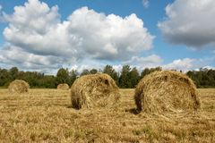 Hayfield and haystack Stock Images