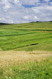 Hayfield Landscape Royalty Free Stock Images