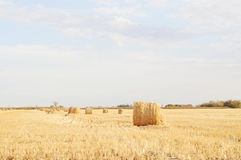 Hayfield landscape on sunny day. Hayfield landscape with stack of hays on sunny day Stock Photo