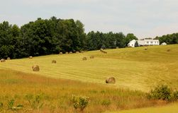 Hayfield. A maine hayfield with rolls of hay Stock Image