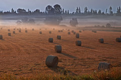 Hayfield in Misty Morning Royalty Free Stock Photos