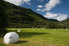 Hayfield in Norway Stock Photography