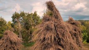 hayfield pajares en un peque?o campo cerca de los pajares ucranianos del pueblo del bosque en el campo Paisaje de la aldea Verde almacen de video