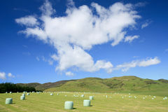 Hayfield and rolled hay bales Stock Photography