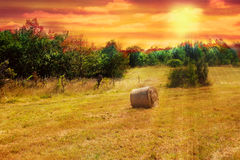Hayfield at sunset royalty free stock photo