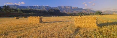 Hayfields in Hogere Ojai-Vallei, Californië stock foto's