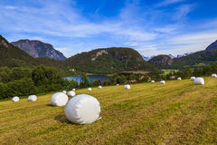 Haying in the field. Picturesque rural landscape. Norway Stock Photos