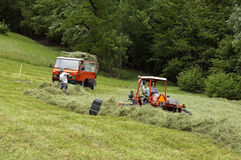 Haying Swiss farmers in alpine meadow, Switzerland Stock Photography