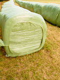 Haylage bales left outdoors for fermentation Royalty Free Stock Images