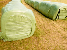 Haylage bales left outdoors for fermentation Royalty Free Stock Image