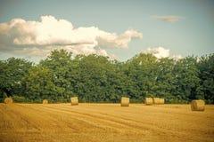 Haylages ha rotolato su erba tagliata, foraggio fotografia stock
