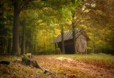 Hayloft nella foresta di autunno Immagini Stock Libere da Diritti