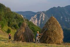 Haymaking и сено штабелируют здание в горах Apuseni, Трансильванию, Румынию стоковое фото