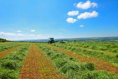 haymaking Шотландия стоковое изображение