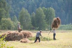 Haymaking людей Стоковые Изображения RF