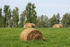 haymaking Стоковое Изображение