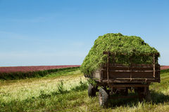 Haymaking Royalty Free Stock Photography