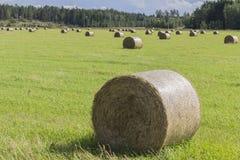 haymaking Стоковое Изображение RF