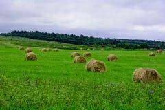 haymaking Стоковая Фотография