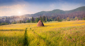 Haymaking in a Carpathian village. Stock Image