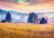 Haymaking in a Carpathian village Stock Photography