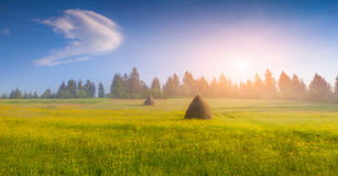 Haymaking in a Carpathian village. Royalty Free Stock Images