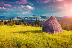 Haymaking in a Carpathian village. Royalty Free Stock Photos