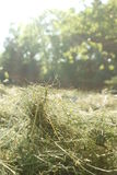 Haymaking, detail view of hay, Stock Images
