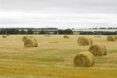 The haymaking is finished. The sheaves of hay ready to transportation in storehouses Royalty Free Stock Image
