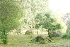 Haymaking, hay and trees in a garden Stock Photos