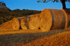 Haymaking - Italy Stock Photography