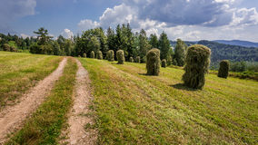Haymaking in the mountains Stock Photos