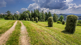 Haymaking in the mountains Stock Photography