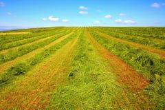 Haymaking in Scotland Stock Photo