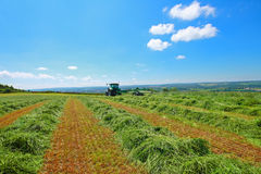 Haymaking in Scotland Stock Image