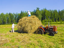 Haymaking in Siberia 13. The image of preparation of hay peasants in Siberia Stock Photo