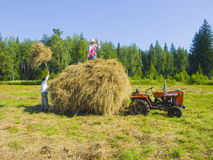 Haymaking in Siberia 15. The image of preparation of hay peasants in Siberia Royalty Free Stock Photos